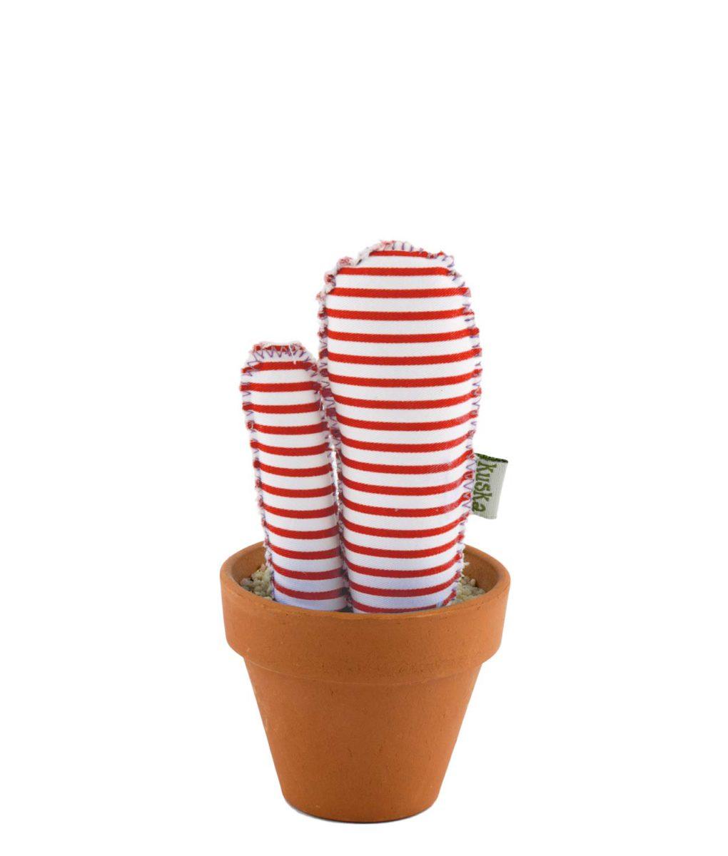 rayas-roja-cactus-pequeno-kuska