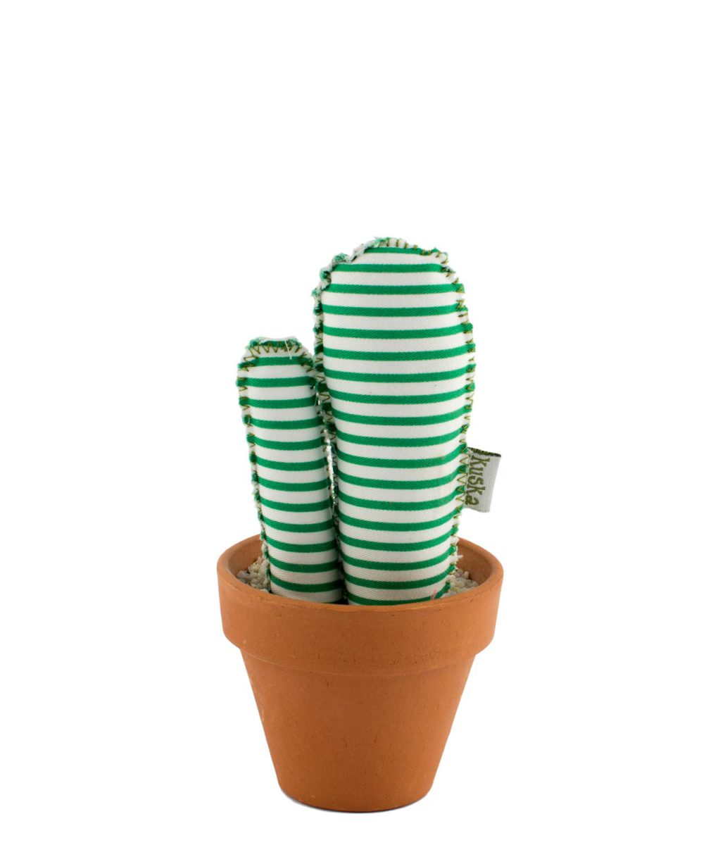 cactus barcelona